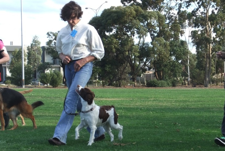 Riverreed Brittany Kennels - Breeders Since 1988 - Melbourne